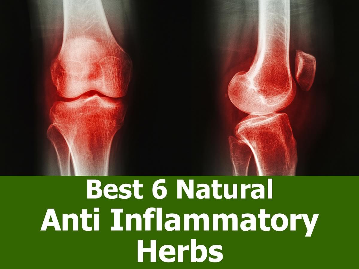 anti-inflammatory-herbs-1