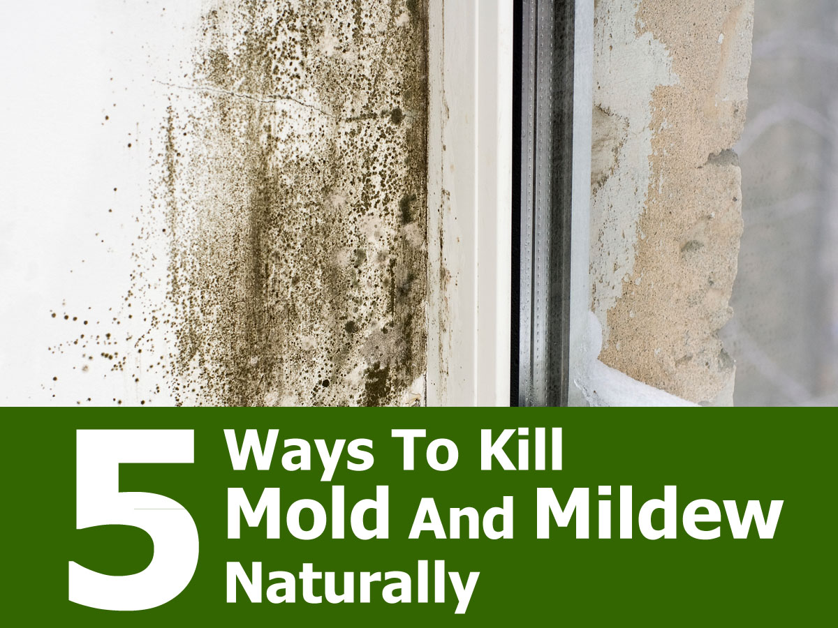 Natural Ways To Remove Mold And Mildew