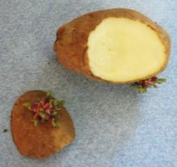 PotatoCut